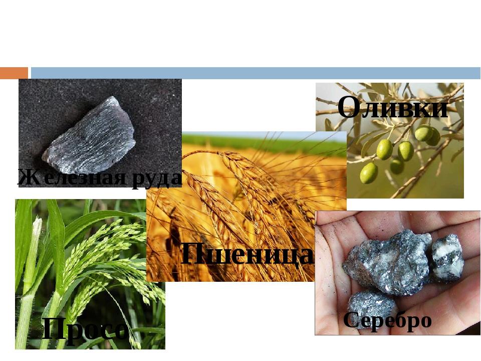 Просо Пшеница Оливки Железная руда Серебро