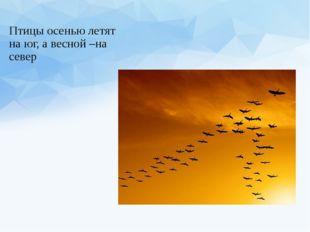 Птицы осенью летят на юг, а весной –на север