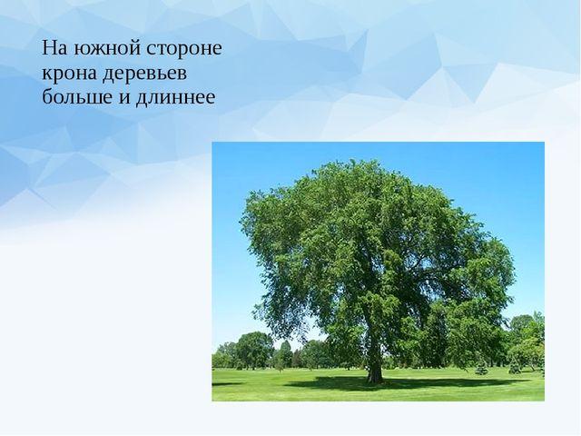На южной стороне крона деревьев больше и длиннее