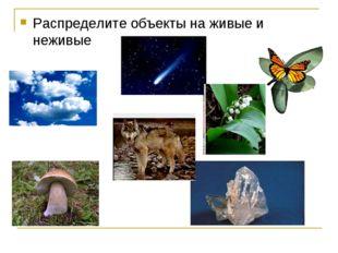 Распределите объекты на живые и неживые