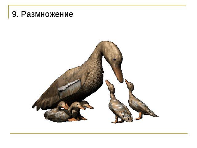 9. Размножение