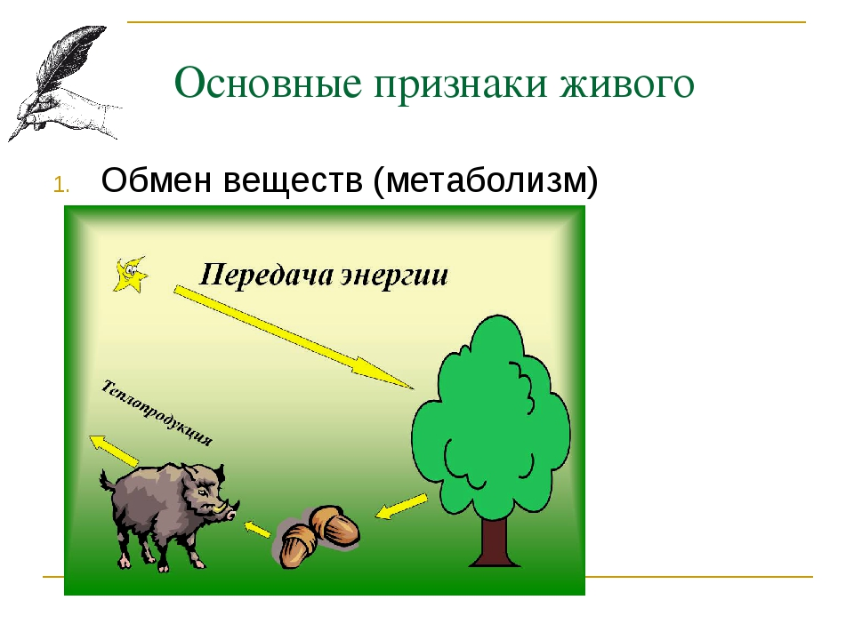 Основные признаки живого Обмен веществ (метаболизм)