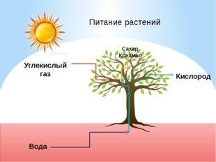 Вода Углекислый газ Сахар Крахмал Питание растений Кислород