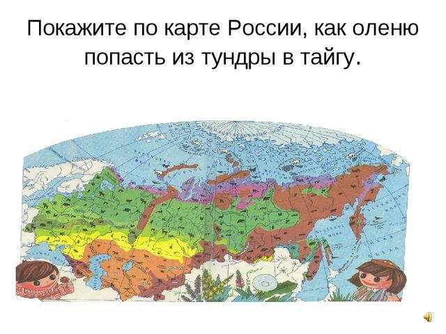 Покажите по карте России, как оленю попасть из тундры в тайгу.