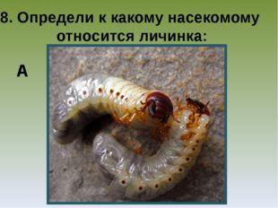 8. Определи к какому насекомому относится личинка: А