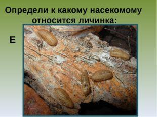 Определи к какому насекомому относится личинка: Е