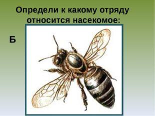 Определи к какому отряду относится насекомое: Б