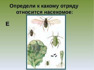 Определи к какому отряду относится насекомое: Е