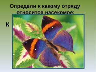 Определи к какому отряду относится насекомое: К