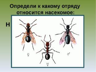 Определи к какому отряду относится насекомое: Н