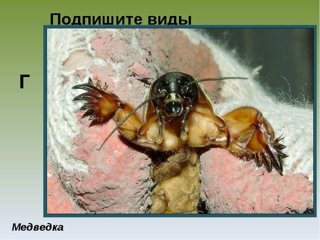 Подпишите виды конечностей представленных насекомых Медведка Г