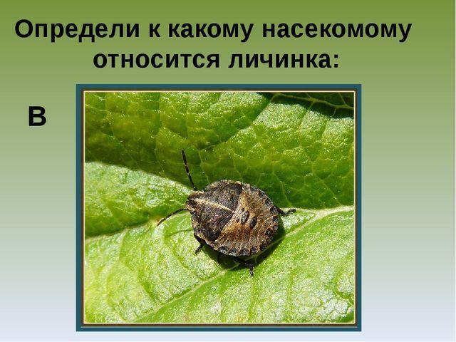 Определи к какому насекомому относится личинка: В