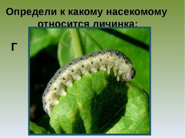 Определи к какому насекомому относится личинка: Г
