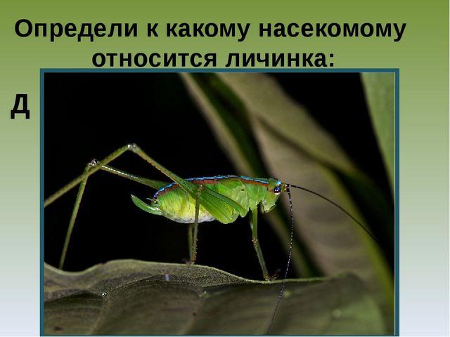 Определи к какому насекомому относится личинка: Д