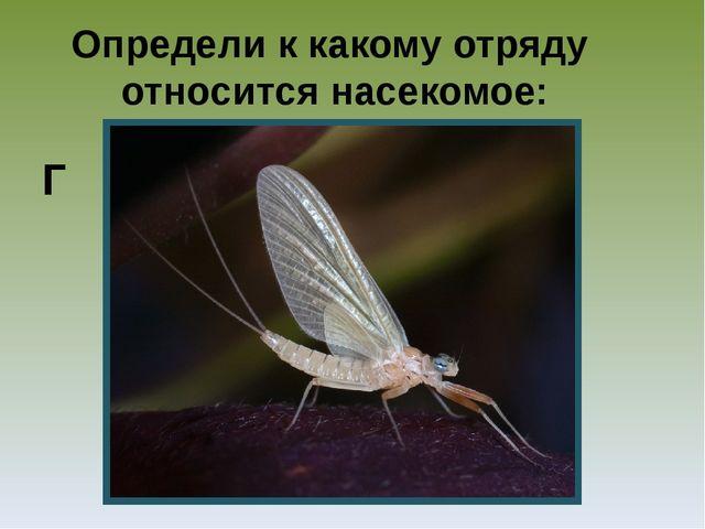 Определи к какому отряду относится насекомое: Г