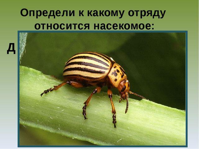 Определи к какому отряду относится насекомое: Д
