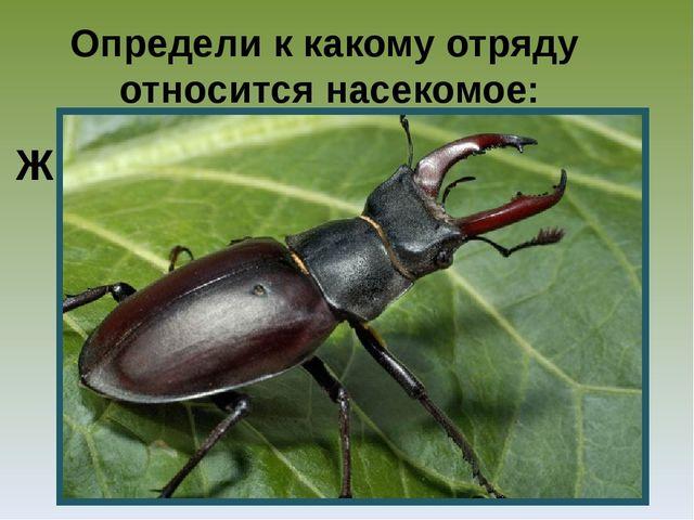 Определи к какому отряду относится насекомое: Ж