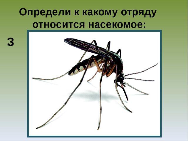 Определи к какому отряду относится насекомое: З