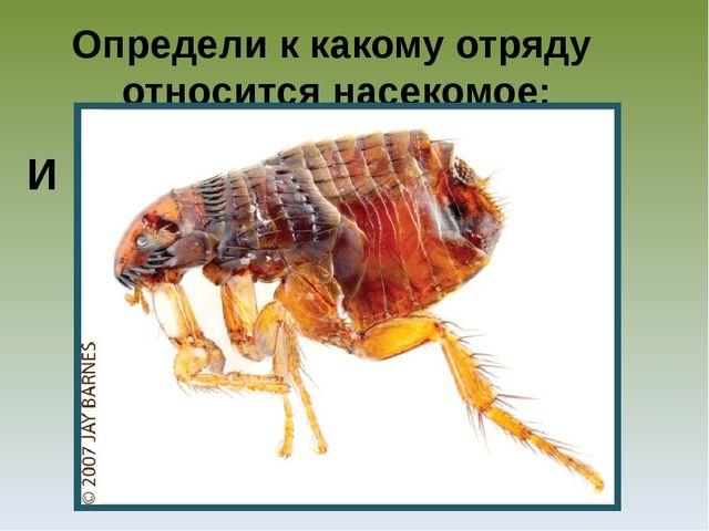 Определи к какому отряду относится насекомое: И