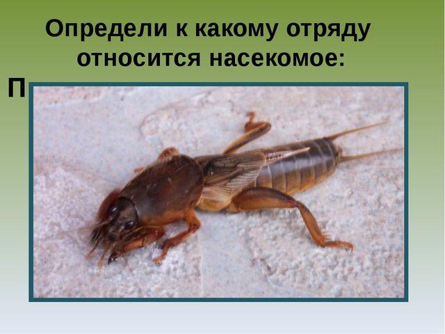 Определи к какому отряду относится насекомое: П