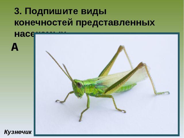 3. Подпишите виды конечностей представленных насекомых Кузнечик А