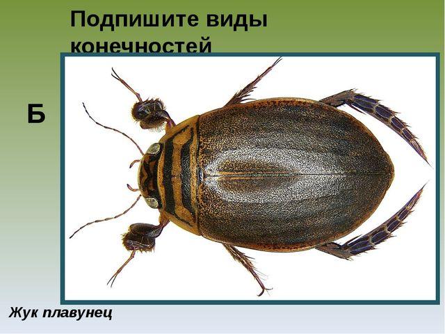 Подпишите виды конечностей представленных насекомых Жук плавунец Б