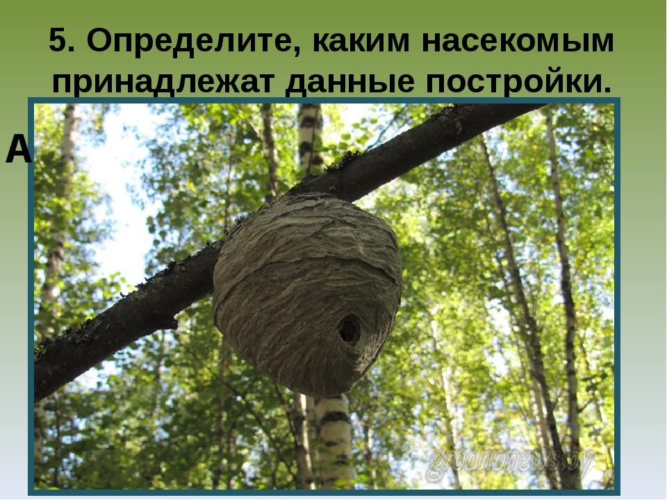 5. Определите, каким насекомым принадлежат данные постройки. А