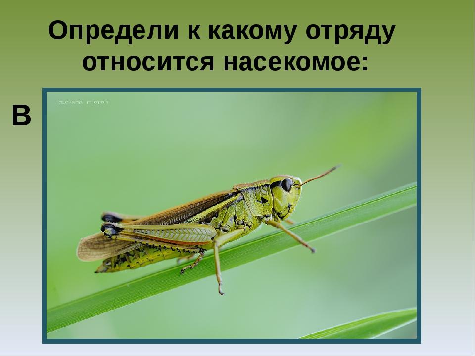 Определи к какому отряду относится насекомое: В