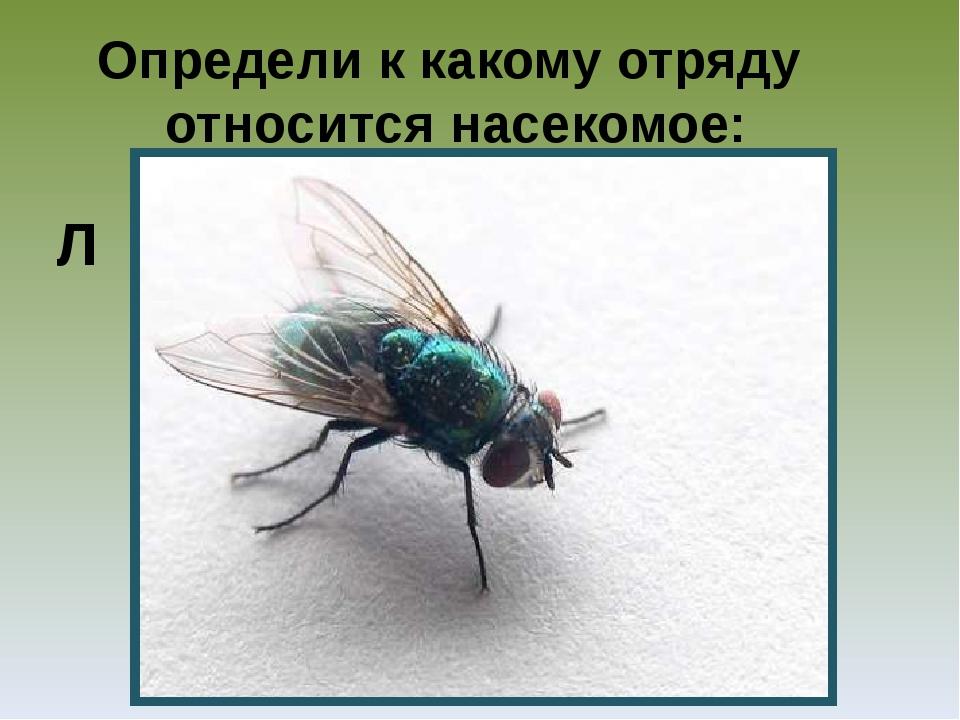 Определи к какому отряду относится насекомое: Л