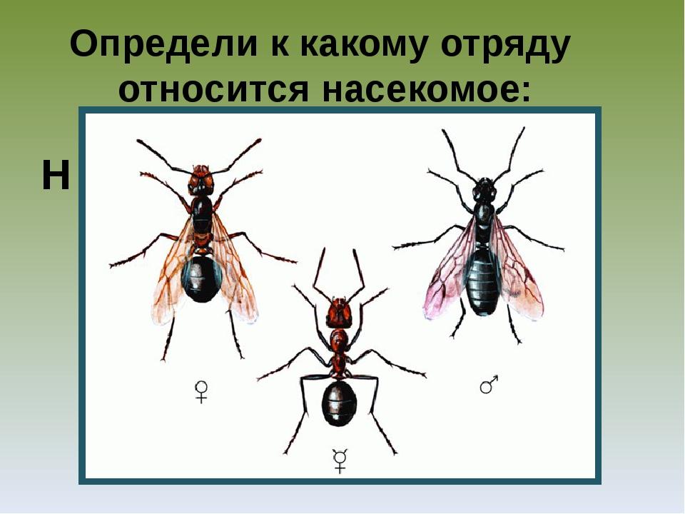 Многообразие паукообразных и их значение в природе и жизни человека
