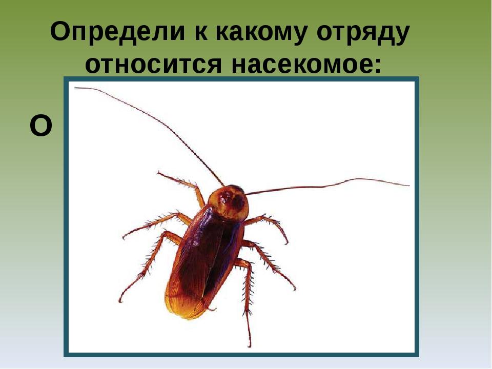 Определи к какому отряду относится насекомое: О