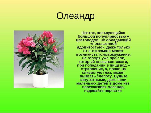 Олеандр Цветок, пользующийся большой популярностью у цветоводов, но обладающи...