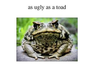as ugly as a toad