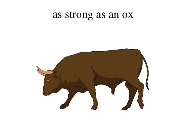 as strong as an ox