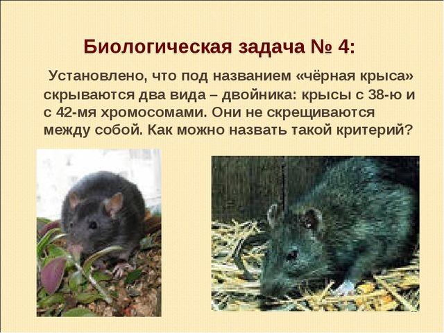 Биологическая задача № 4: Установлено, что под названием «чёрная крыса» скрыв...