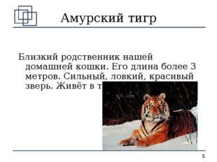 Амурский тигр Близкий родственник нашей домашней кошки. Его длина более 3 мет