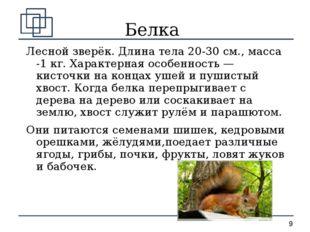 Белка Лесной зверёк. Длина тела 20-30 см., масса -1 кг. Характерная особеннос