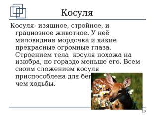Косуля Косуля- изящное, стройное, и грациозное животное. У неё миловидная мор