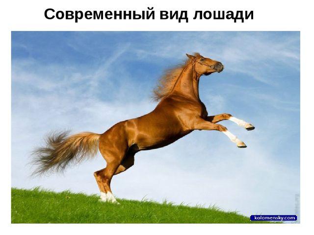 Современный вид лошади