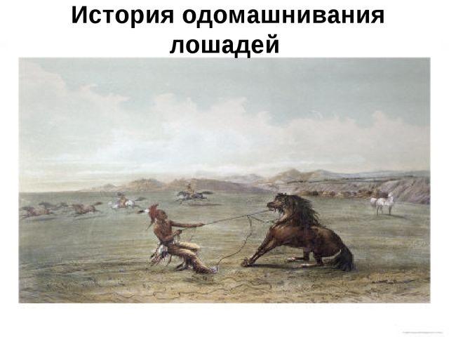 История одомашнивания лошадей