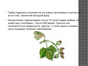 Грибы-паразиты поселяются на живых организмах и питаются за их счёт, нанося