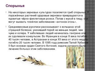 Спорынья На некоторых зерновых культурах поселяется гриб спорынья. У поражённ