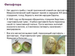 Фитофтора Нет другого гриба с такой трагической славой как фитофтора. Микроск