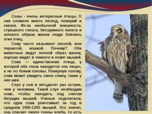 Совы - очень интересные птицы. О них сложено много легенд, поверий и сказок.