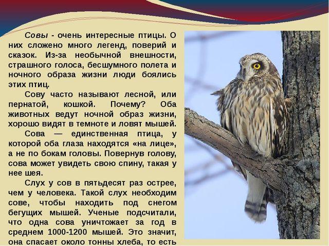 Совы - очень интересные птицы. О них сложено много легенд, поверий и сказок....