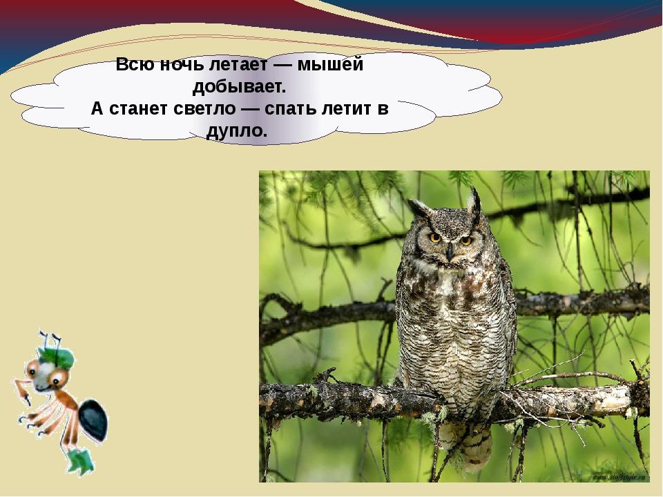 Всю ночь летает — мышей добывает. А станет светло — спать летит в дупло.