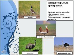 дрофа обыкновенная страус эму Птицы открытых пространств Крылья малы и слабы.