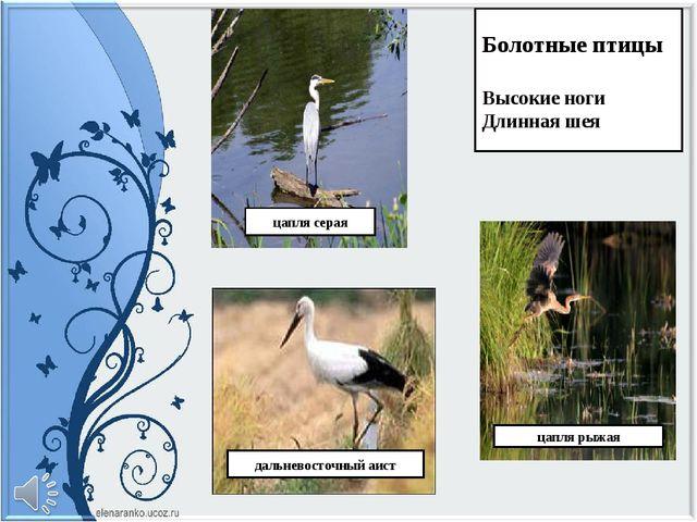 Болотные птицы Высокие ноги Длинная шея цапля серая цапля рыжая дальневосточн...