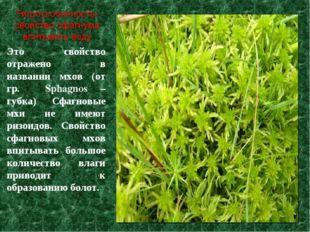 Это свойство отражено в названии мхов (от гр. Sphagnos – губка) Сфагновые мхи