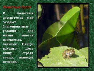 В болотных экосистемах мхи создают благоприятные условия для жизни многих нас